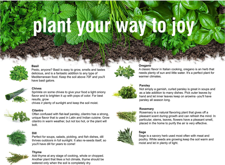 Indoor Garden Starter Kit Beginner-Friendly Instruction Manual ...
