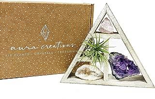 Tillandsia Air Plant and Purple Amethyst Crystal Healing Cluster/Terrarium Fairy Garden Stone + Kraft Gift Box