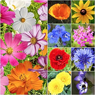 30,000 Seeds, Wildflower Mixture All Annual (20 Species) Seeds By Seed Needs