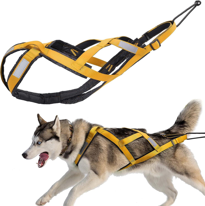 arnés deportivo para perros