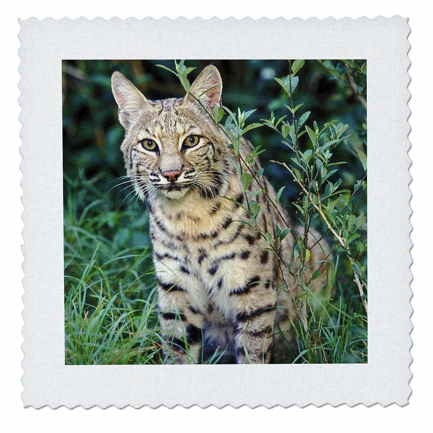 3dRose qs_83596_1 Bobcat Wildlife NA02 AJE0286 Adam Jones Quilt Square, 10 by 10-Inch