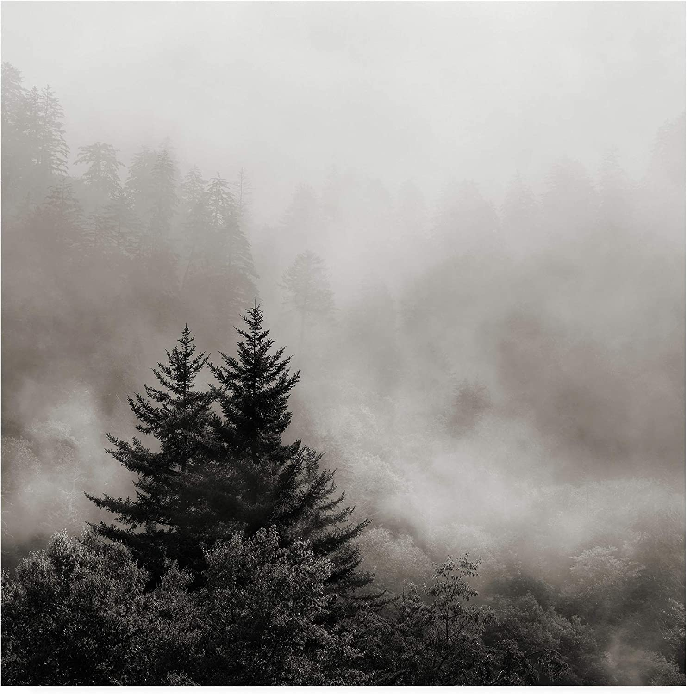 Trademark Fine Art Rising Mist, Smoky Mountains by Nicholas Bel, 14x14 Multiple