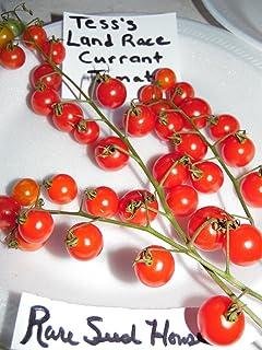 Portal Cool Paquete de Semillas: Autóctona Semillas de Grosella Tomate de Tess! Peine. S/H Vea Nuestra Tienda para Las Semillas Raras!