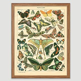 Antique Butterfly Poster Antique Butterfly Book Plate Print Papillons Wall Decor Entomology Wall Art Vintage Butterfly Wall Hanging Insect Artworks Great Gift for Butterfly Lover