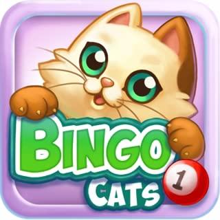 cat lottery