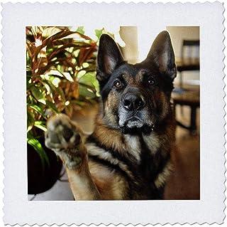 3dRose Funny Cute Doberman Pinscher Puppy Dog Art Quilt Square 25 x 25