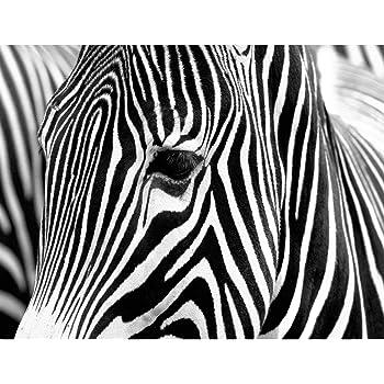 VLIES FOTOTAPETE Schwarz Türkise Zebras Tapete XXL Vliestapete