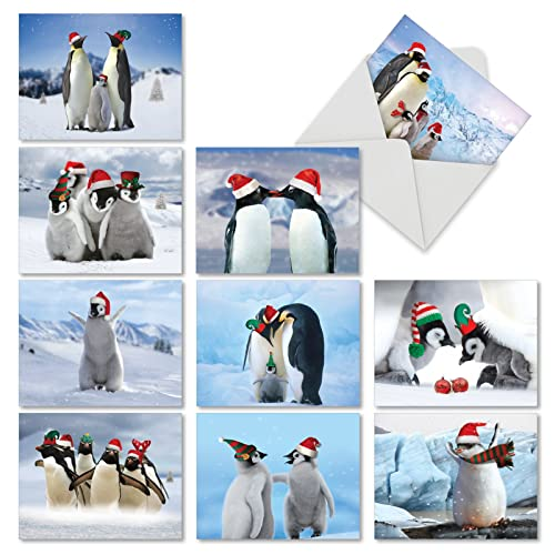 df15dfd7f713c Holiday Boxed Cards with Animals  Amazon.com