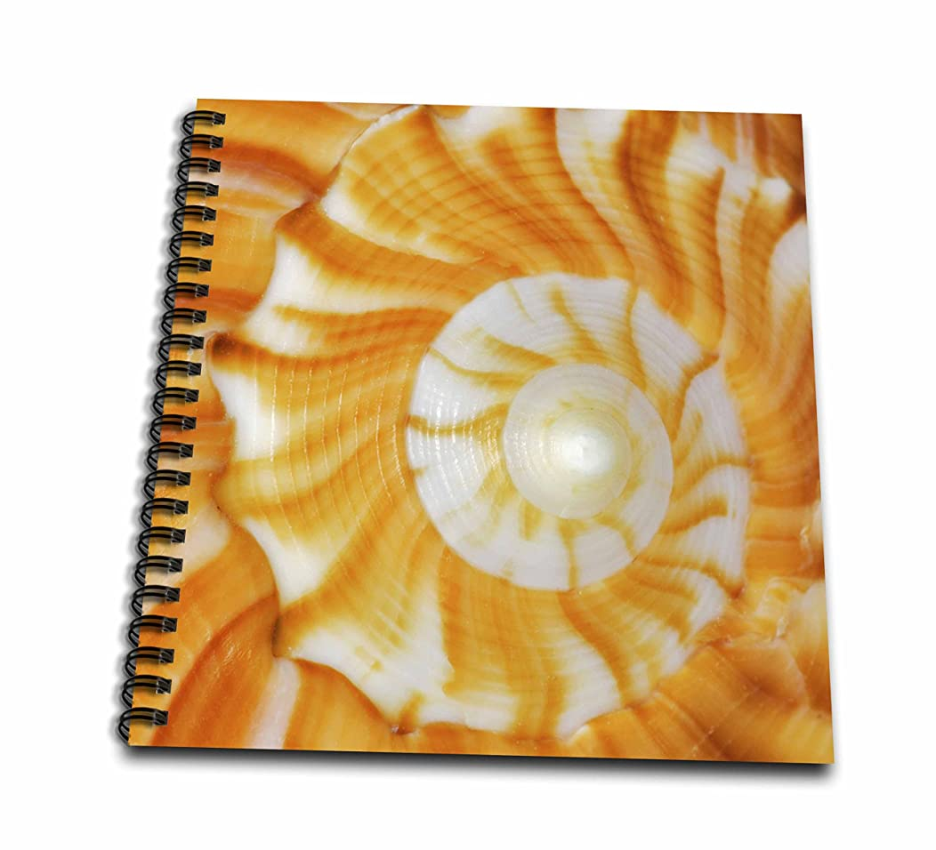 3dRose db_89003_1 Natural Spiral Pattern in Seashell, Florida-Us10 Aje0186-Adam Jones-Drawing Book, 8 by 8-Inch