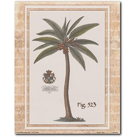 vintage palm tree wall decor tropical fig 523 picture art print poster 16x20