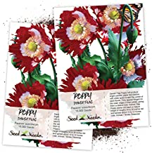 Seed Needs, Danish Flag Poppy (Papaver somniferum) Twin Pack of 10,000 Seeds Each