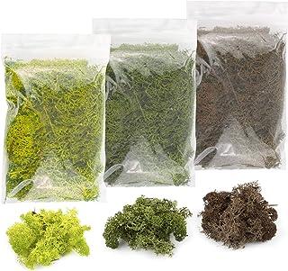 War World Scenics Lichen Moss Model Foliage Multi-Pack 3 x 20g (Light Green, Dark Green, Brown) –Railway Modelling Wargame...