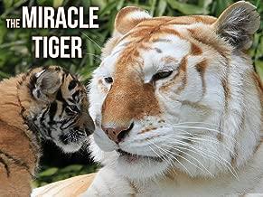tiger documentary