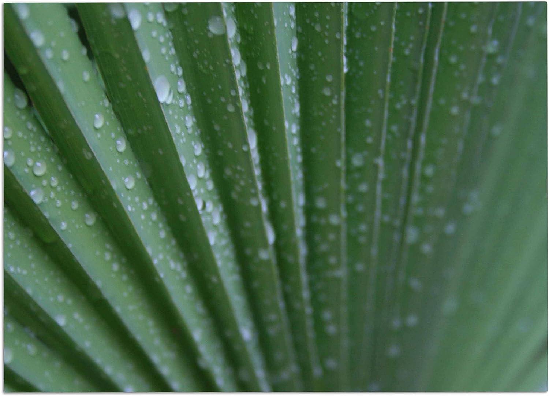 KESS InHouse CS2038ADM02 Cyndi Steen Green Palm Frond Green Nature Dog Place Mat, 24  x 15