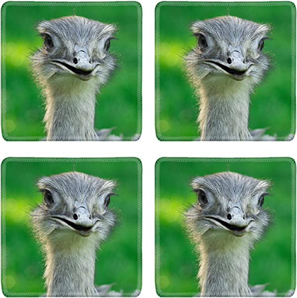 MSD Natural Rubber Square Coasters Set Of 4 Design For Bird Beak Animal Head Eye Feather Wild Nature Emu Wildlife Ostrich Look Fac