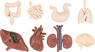 Safari Human Organs
