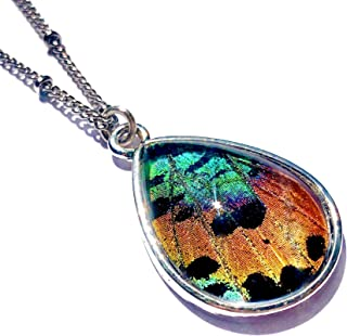 Real butterfly wing necklace Pressed flower necklace for women Taxidermy insect jewelry Preserved butterfly jewelry Sunset moth necklace teardrop