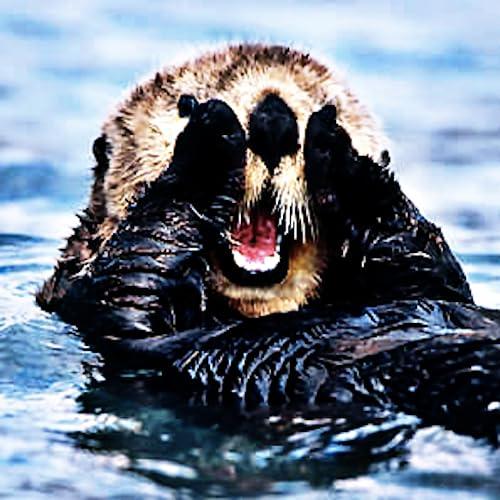 Sea Otters - The Ocean's Furry Friend