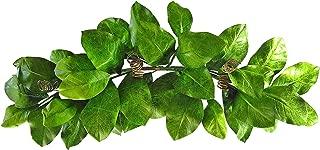 Best 36 inch magnolia wreath Reviews