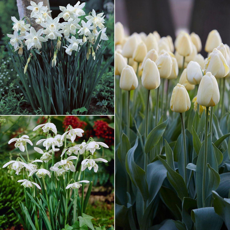 Van Zyverden Color Your Garden White Collection Set of 49 Bulbs