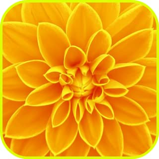Best free yellow wallpaper Reviews