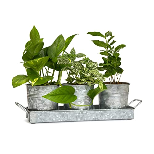 9ca5d2d5526 Farmhouse Decor Flower Pot and Tray Set By Walford Home - Vintage Galvanized  Windowsill Planter -
