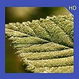 Retina Wallpaper HD Free