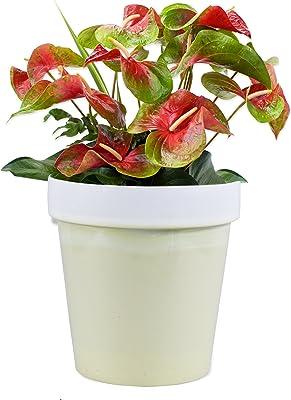 Sharpex Classic Flower Pot (Pista)