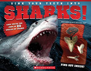 shark book with shark tooth necklace