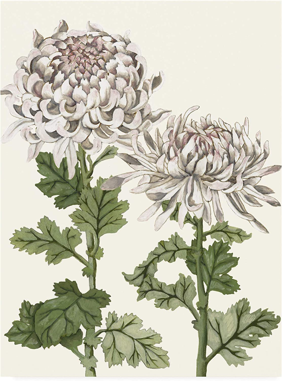Trademark Fine Art Early Spring Chrysanthemums II by Naomi McCavitt, 14x19