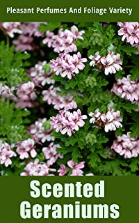Scented Geraniums: Pleasant Perfumes and Foliage Variety (English Edition)