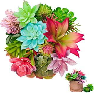 Best bright colored succulents Reviews