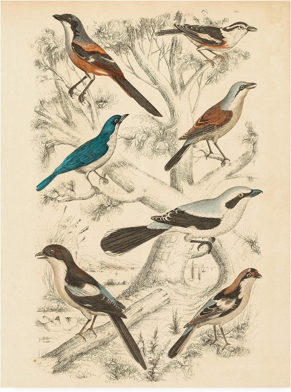Trademark Fine Art Avian Habitat V by Milne, 14x19