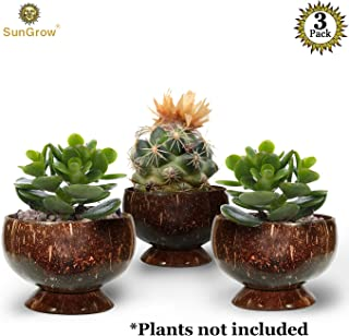 Best coconut shell planters Reviews