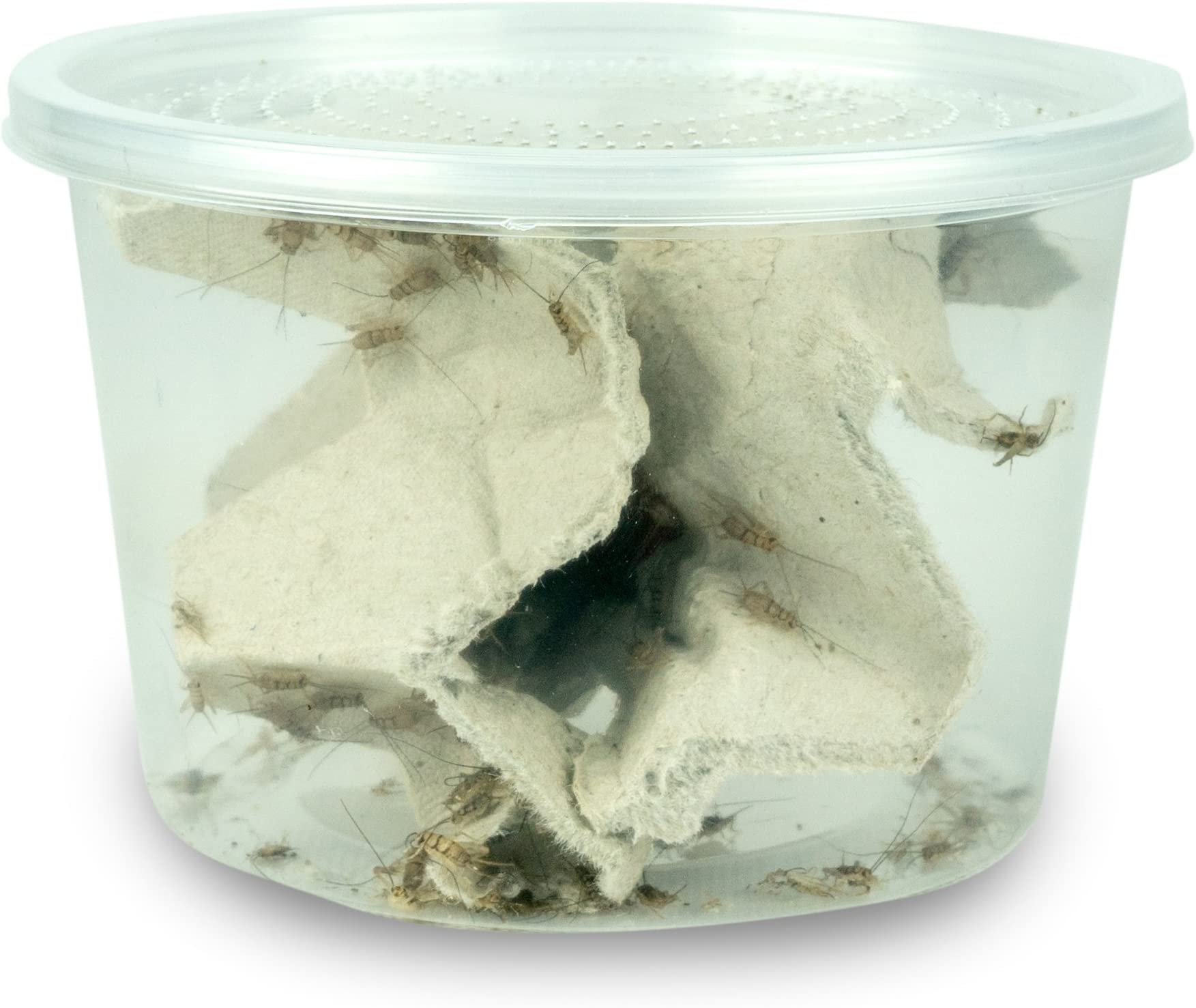 """Josh's Frogs 1/4"""" Banded Crickets"""