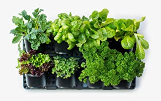 Expandable Green Wall w/Built-in Micro dripper, Single Pack; BPA Free Planters