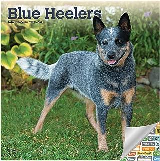 Blue Heelers Calendar 2020 Set - Deluxe 2020 Blue Heelers Wall Calendar with Over 100 Calendar Stickers (Dog Lovers Gifts, Office Supplies)