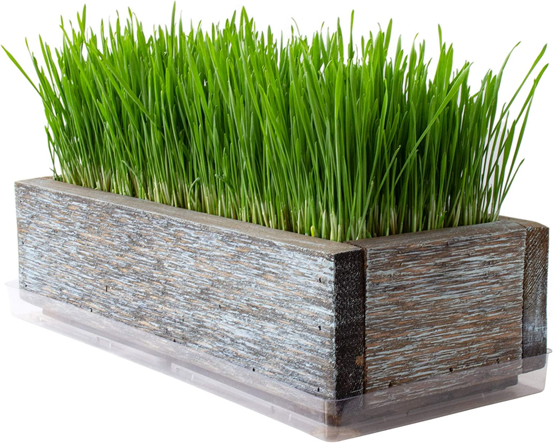 Reclaimed Barnwood Style Planter Wheatgrass 40%OFFの激安セール Kit Aged - ご注文で当日配送 G Brown