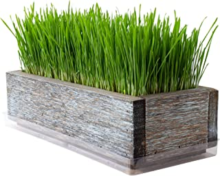 Reclaimed Barnwood Style Planter Wheatgrass Kit - Aged Brown - Grow Wheat Grass - for Pet / Dog / Cat Grass - Decorative &...