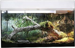 Amazon.es: Gecko Kit
