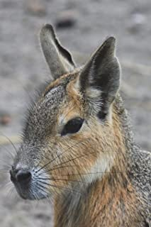 Patagonian Hare Journal: 150 page lined notebook/diary