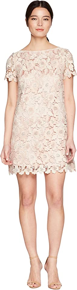 Petite Lace Shift Dress