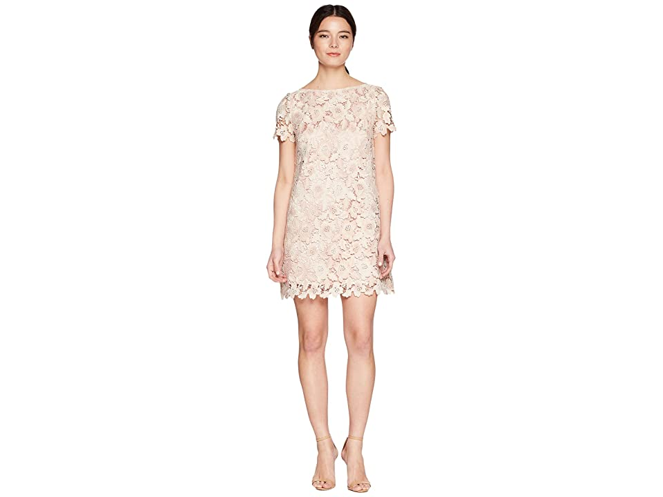 Tahari by ASL Petite Lace Shift Dress (Ivory/Blush) Women