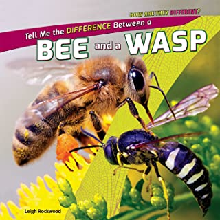 Tell Me the Difference Between a Bee and a Wasp (How Are They Different?)