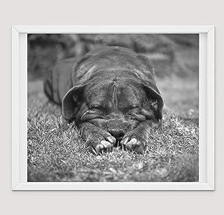 Pitbull Regali Fotografici d'Arte Per Gli Amanti Dei Pitbull, Stampe su Tela di Poster Varie Dimensioni, Decorazione Mural...