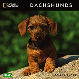 National Geographic Dachshunds 2019 Wall Calendar