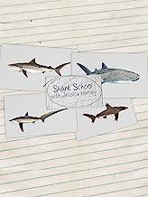Shark School with Jessica Harvey
