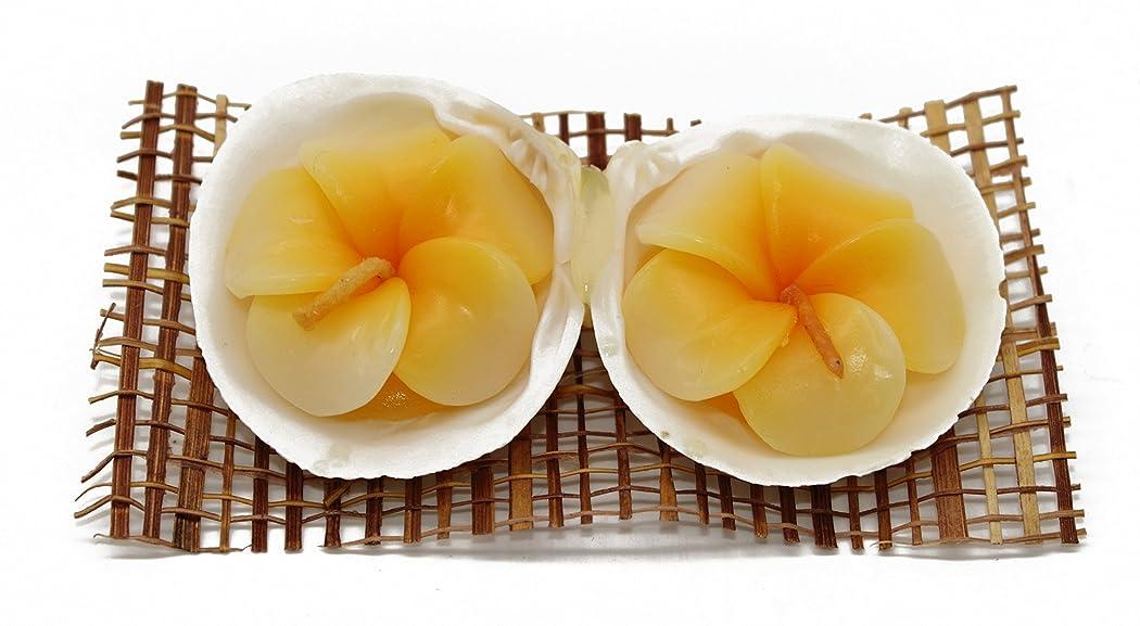 数ありふれた採用ハワイでパーティーに2花型Canclesシェルホルダープルメリア香りでホワイト