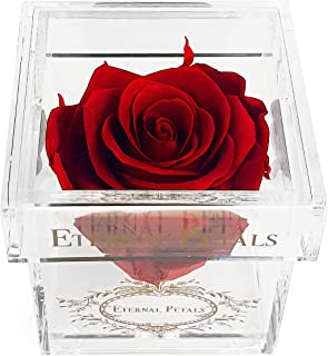 A Real Rose That Lasts A Year - Gold Solo (Deep Red)