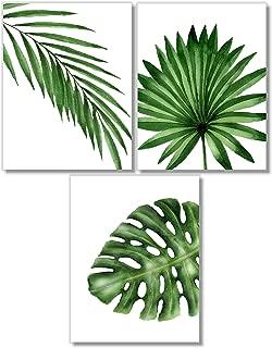 date palm nursery